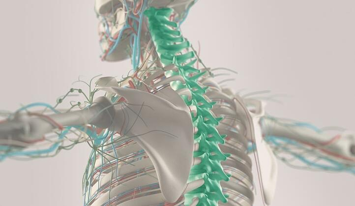 The Spinal Cord Injury Anatomy: Simplified Articles - Relief Institue