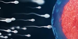 Sperm-and-egg-fertilization-CGI-concept-image