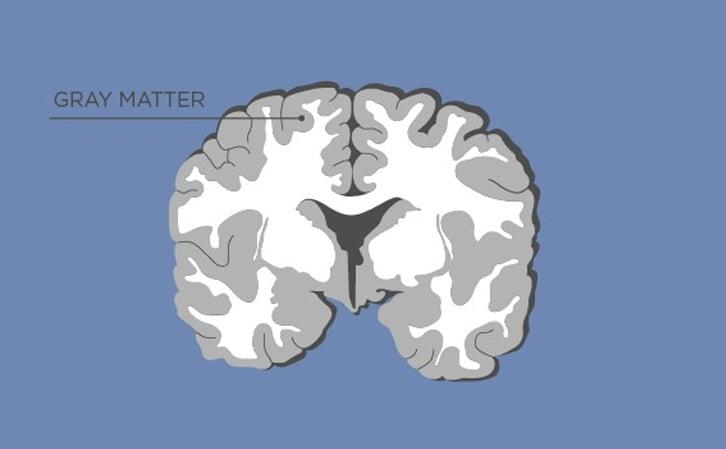 Brain - Gray Matter
