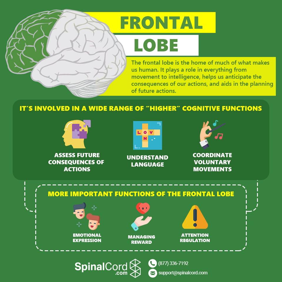Infographic-Frontal-Lobe