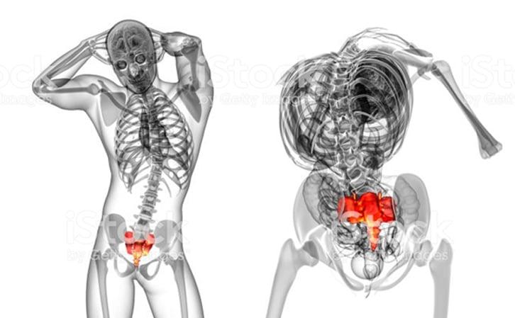 Sacrum - Spinal Cord