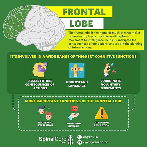 Infographic-Frontal-Lobe