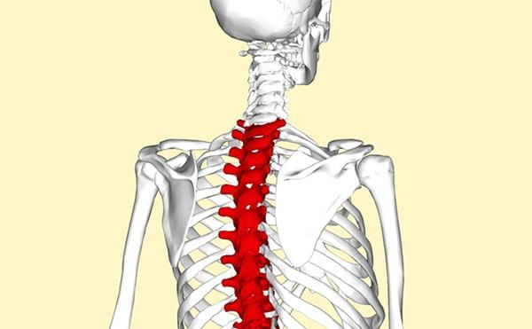 T-level-vertebrae-Injury