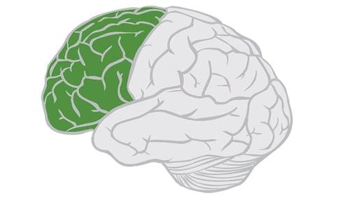 Frontal-Lobe-Brain-Anatomy