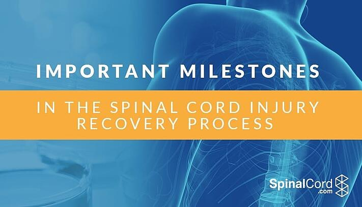 Important Milestones in the Spinal Cord Injury Recovery Process