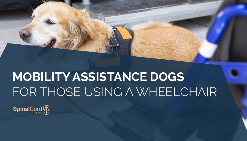 mobility assistance dogs for those using a wheelchair