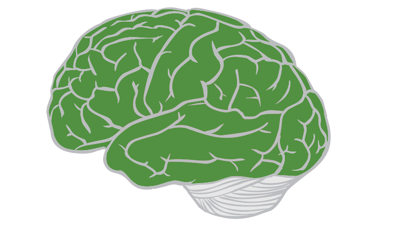 Lobes of the Brain   SpinalCord.com