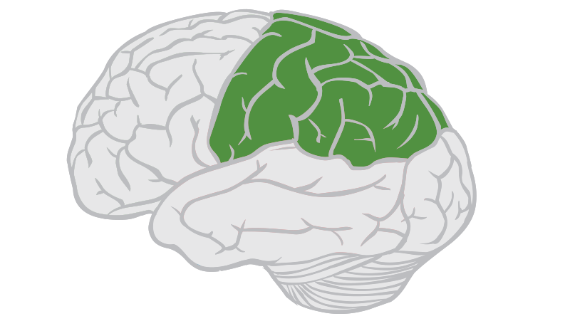 parietal-lobe.png