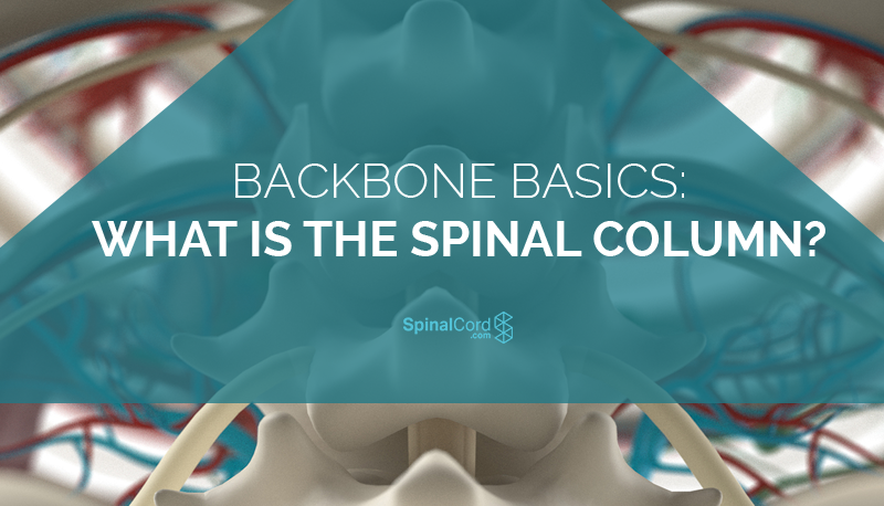 Backbone-Basics-What-is-the-Spinal-Column-Blog-IMG.png