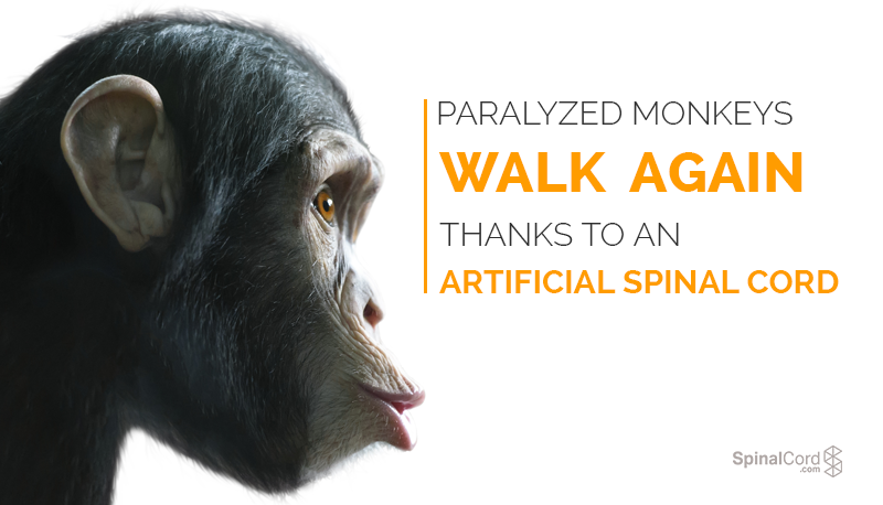 Paralyzed-Monkeys-Walk-Again-Thanks-To-An-Artificial-Spinal-Cord-Blog-IMG.png
