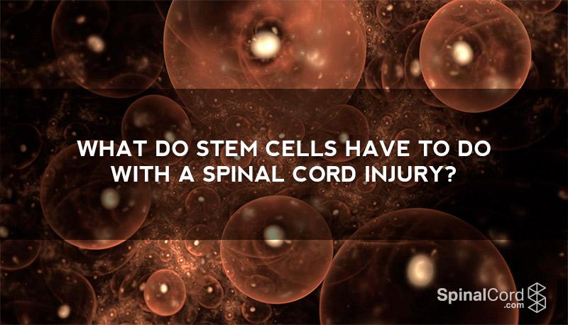 stem-cells-spinal-cord-injury-wb